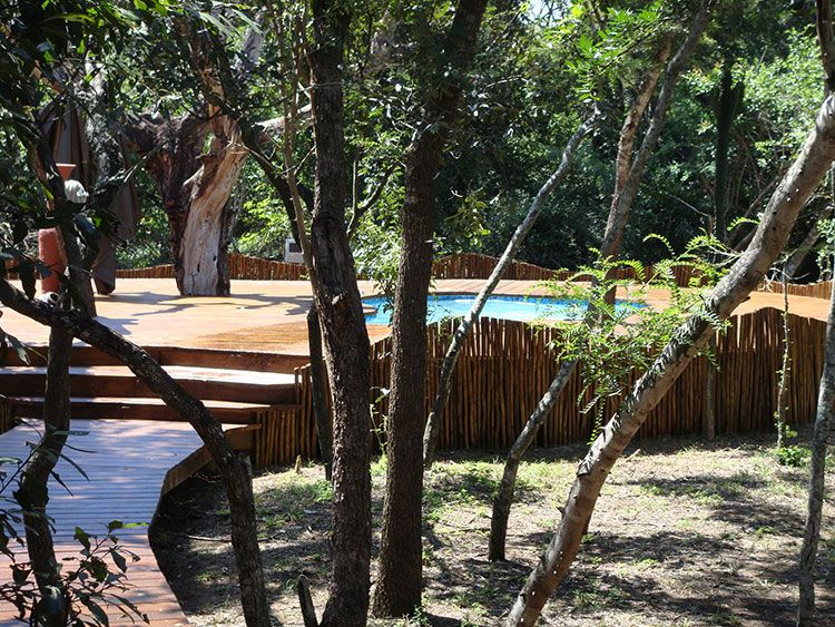 Ihlozi Bush Lodge Garden Walkways and Pool