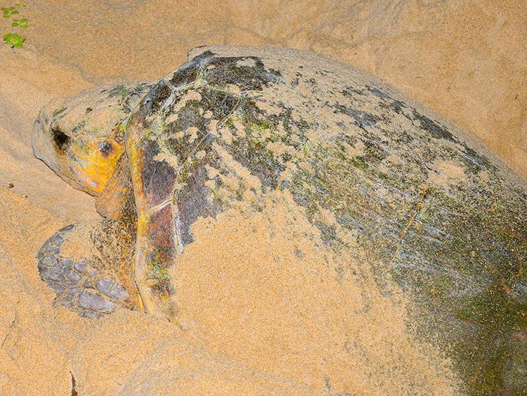 Kosi Bay Turtle Tour